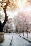 Park alley tree way winter Royalty Free Stock Photo