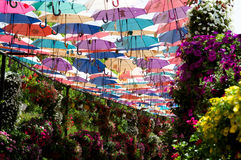 Park alley with  umbrellas. Dubai Miracle Garden in the UAE Royalty Free Stock Photography
