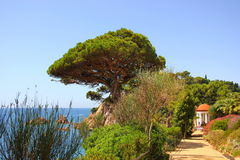 Park along the cliff above the sea Royalty Free Stock Images