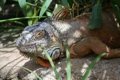 Park Amazonas-Gebiet Teneriffas Los Cristianos Stockfoto
