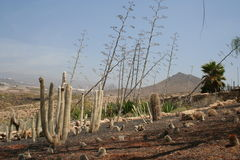 Park Amazonas-Gebiet Teneriffas Los Cristianos Lizenzfreie Stockfotos