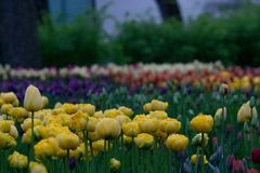 Park ans flowers Royalty Free Stock Photography