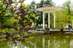 Park arboretum. The pond and gazebo in the lower Park arboretum, Sochi, Russia Royalty Free Stock Images