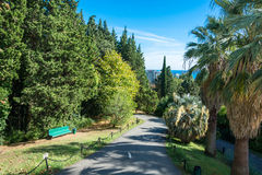 In the Park-the arboretum of Sochi. In the Park-the arboretum of Sochi city on a Sunny autumn day Stock Images