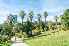 In the Park-the arboretum of Sochi. In the Park-the arboretum of Sochi city on a Sunny autumn day Stock Photos