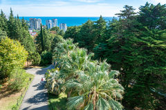 In the Park-the arboretum of Sochi. In the Park-the arboretum of Sochi city on a Sunny autumn day Stock Photography
