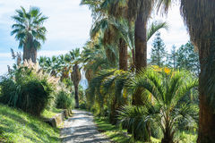 In the Park-the arboretum of Sochi. Royalty Free Stock Photo
