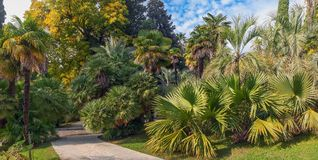 Exotic plants in the Arboretum of Sochi. Russia. Park arboretum in Sochi deservedly has the status of a monument of landscape art Stock Images