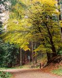Park in Ardennes. In Belgium, autumn royalty free stock images