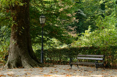 Park area with old tree, lantern and bench Royalty Free Stock Images
