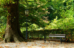Park area with old tree, lentern and bench Stock Photo