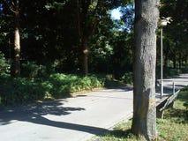 Park auf Sommer Stockbild
