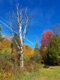 Park in autumn. Autumn tree in the park Stock Photo