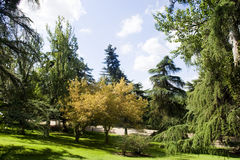 Park in autumn. Sunny day in a park in spain Stock Photography