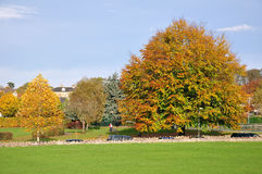 Park in Autumn Royalty Free Stock Photography