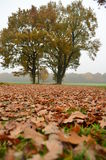 Park in autumn. Autumn landscape of a small town Stock Photos