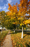 Park. autumn Royalty Free Stock Images