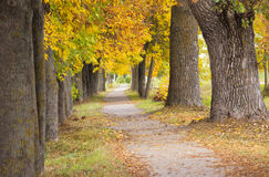 Park. autumn. The trees growing along the foot road to an autumn season Stock Photography