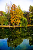 Park in autumn Stock Photography