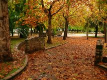 Park in autumn. Falling yellow leaves in a park in autumn stock image