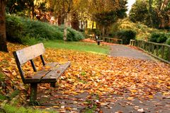 Park in Autumn. Autumn scene of empty park with bench and fallen leaves stock photos