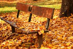 Park in Autumn. Autumn scene of empty park with bench and fallen leaves stock images