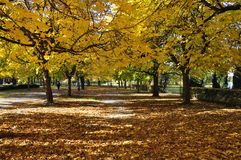 Park in autumn Stock Image
