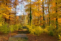 Park in autumn. Walking path in a park in fall, vibrant colors stock images