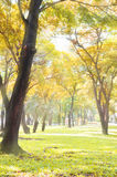 Park in autumn colorful Royalty Free Stock Photos