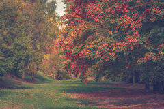 Park in autumn. Colorful trees in autumn park Stock Images