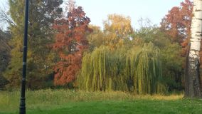 Park in autumn. Different kinds of tree in park Stock Images