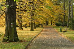 Park in autumn or fall Stock Photography