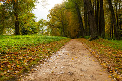 Park in autumn with fallen leaves - autumn cloudy landscape Royalty Free Stock Photography
