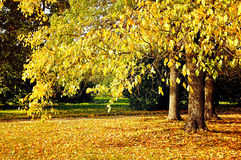 Park in autumn with fallen leaves - autumn sunny landscape Royalty Free Stock Images
