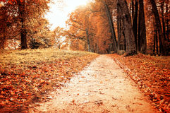 Park in autumn with fallen leaves - autumnal colorful landscape Royalty Free Stock Photos