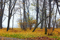Park in autumn in foggy weather Stock Photography