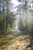 Park in autumn, foliage covered - in the sunshine Stock Images