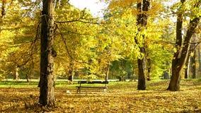 Park autumn forest sun. Park autumn handheld forest sun stock footage
