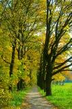 Park autumn lanscape Stock Image