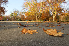 Park with autumn leafs Stock Photos