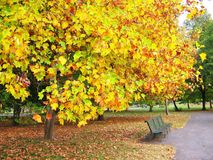 A park in autumn Stock Photos