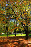 Park autumn Royalty Free Stock Images