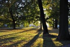 Park. Autumn park outdoor stock photo