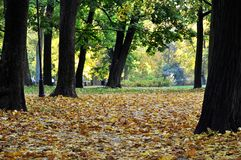 Park. Autumn park outdoor royalty free stock images