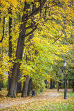 Park in autumn. Path littered with leaves Stock Photos