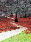 Park in autumn with a pathway Stock Photos