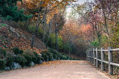 Park in autumn Royalty Free Stock Image