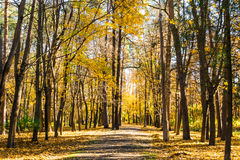 Park on autumn Stock Photography