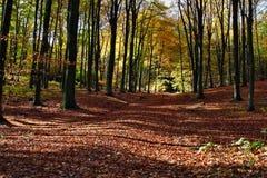 Park in autumn Royalty Free Stock Photos