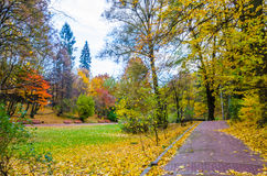 The park in the autumn Royalty Free Stock Image